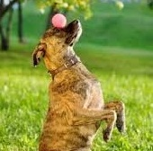 Trick Training for Dogs