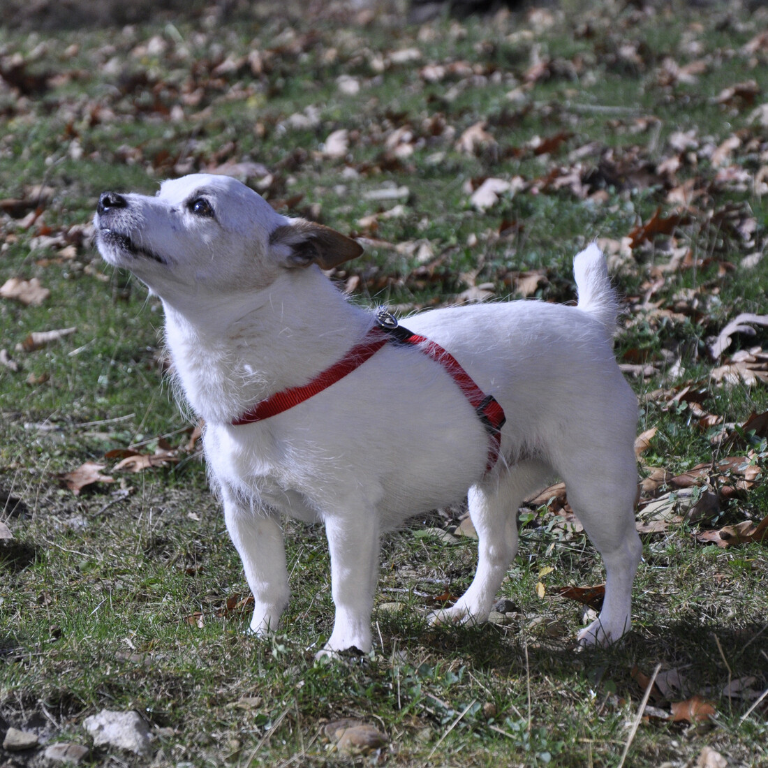 Dog Harnesses at The Bark Academy