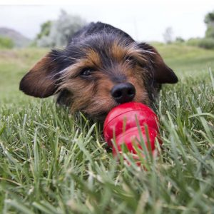 Treat Refills for Interactive Dog Toys