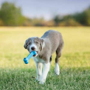 Fetch Toys for Puppies